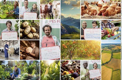 Bündnis fordert Reformen für eine EU-Lebensmittelpolitik