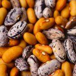 Petition: Freier Saatguttausch für Erhalter*innen der Vielfalt