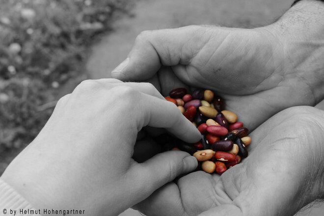 Im Jahr der Biodiversität: EU-Pflanzengesundheitsverordnung behindert Tausch und Verkauf von freiem Vielfaltssaatgut!
